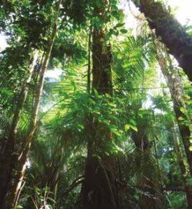 Propiedades del Árbol Huacaparana