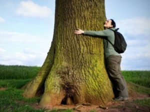 Para qué sirve el Árbol Cetico