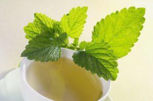 Como preparar el té de toronjil cuyano para la diabetes
