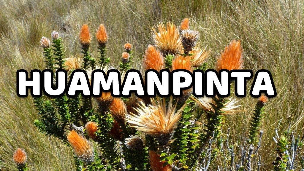 Huamanpinta