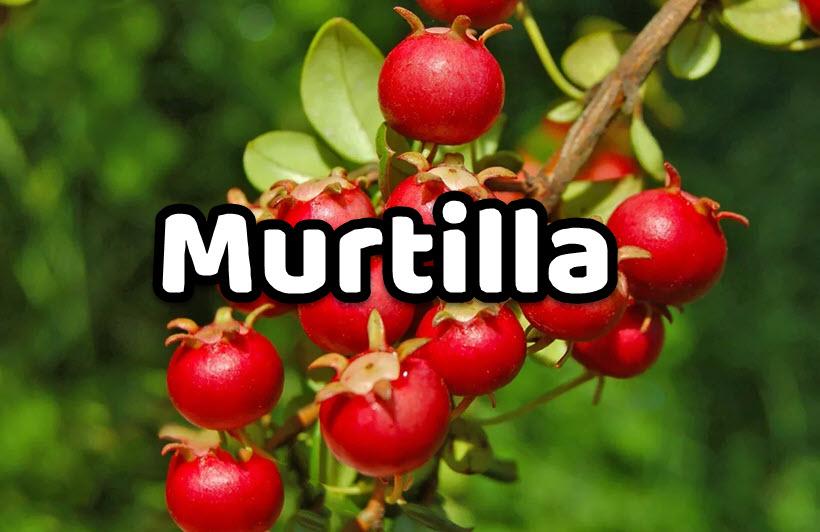 Murtilla
