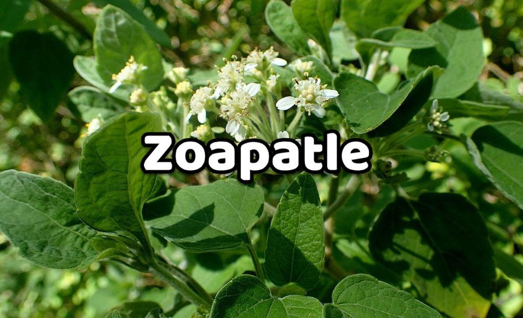 Zoapatle