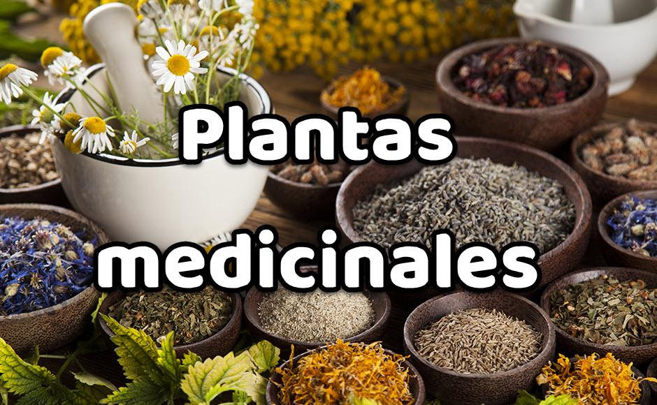 plantas medicinales y su uso